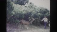 1958: deer befriends man COLORADO Stock Footage