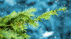 Background for Christmas or New Year with  tree branch of christmas tree. Eff Stock Footage