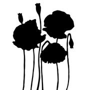 Very high quality original illustration of poppy flower. blossom Piirros