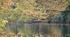 English Woodland: Epping Forest, England; pan Stock Footage