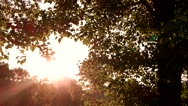 Tree and bright sun. Stock Footage