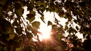 Tree leaves and sunlight. Stock Footage