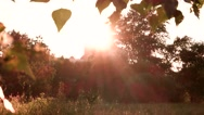 Leaves in sunlight. Stock Footage
