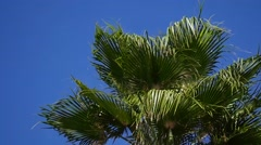 Palm branch waving on blue sky background Stock Footage