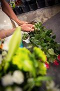 Mid section of male florist trimming stems of flowers at his flower shop Stock Photos