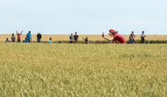 Quievy,France - July 07, 2015:  Vittel Mascot in a Wheat Field- Tour de France Stock Photos