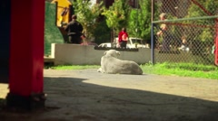 Lazy dog in the park enjoys the sun at the sunny day.  Stock Footage