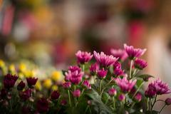 Flowers arranged in florist shop Stock Photos