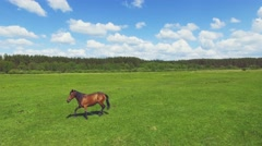 Flight above the green meadow with grazing horse. 4K 30fps Stock Footage