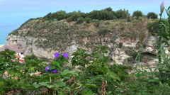 Magenta flowers against the background of a cliff at sea Stock Footage