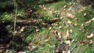 Grass in sunlight Stock Footage