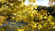 Beautiful autumn leaves in sunlight Stock Footage