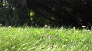 Ants with wings in grass walk and fly. Insect nest during swarming mating time Stock Footage