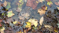 Fall Leaves Rippling in River Water Stock Footage