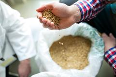 Close-up of brewer pouring grains at brewery factory Kuvituskuvat