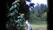 1960: old mom taking care of the yellow flowers in the garden WAUCONDA, ILLINOIS Stock Footage