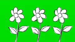 Flowers Growing- Animation - Hand-Drawn - Green Screen - Loop Stock Footage