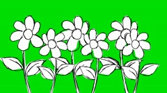 Six Flowers Growing- Animation - Hand-Drawn - Green Screen - Loop Stock Footage