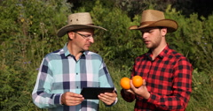 Farmer Men Checking Their Orange Plantation and Discussing Bio Farming Activity Stock Footage