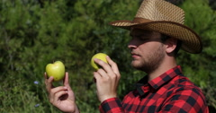 Attractive Farmer Man in Gold Apple Countryland Orchard Examining Fruit Quality Stock Footage