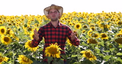 Convinced Agriculturist Man Talking About Sunflower Crop Season in Golden Field Stock Footage