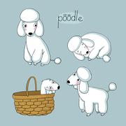 Set of cute poodle illustration in different poses Stock Illustration