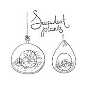 Vector glass terrariums with succulents set Stock Illustration