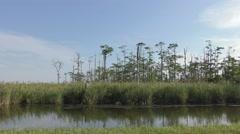Great Dismal Swamp Marsh Water and Trees in Virginia Stock Footage