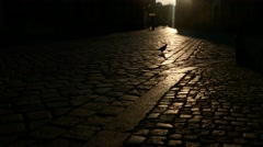 A pigeon walking in a cobblestone road with sunlight on the street Stock Footage