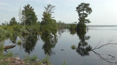 Lake Shoreline at Great Dismal Swamp in Virginia USA Stock Footage