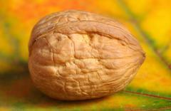 Detail of a walnut Stock Photos