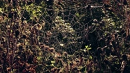 Spider web in morning Stock Footage