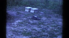1959: two small cats fighting, chasing and playing in the yard CATSKILL GAME Stock Footage