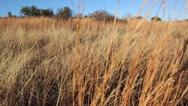 2 Shot Combo- Grassy Field Moving Shots Stock Footage