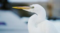 Key West Florida White Bird Crane Heron 5K HD Stock Footage