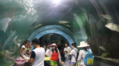 Oceanarium in China Stock Footage