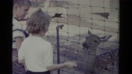 1959: a child is seen petting a deer CATSKILL GAME FARM, NEW YORK Stock Footage