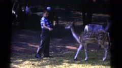 1959: small boy feeding deer CATSKILL GAME FARM, NEW YORK Stock Footage