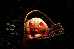 Funny halloween pumpkin in the basket in the darkness with the glow from the Stock Photos
