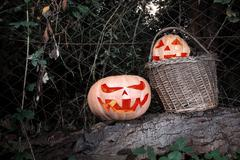 Halloween scary and funny pumpkins on a log in a basket in the darkness with  Stock Photos
