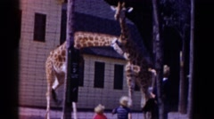 1959: giraffe are seen CATSKILL GAME FARM, NEW YORK Stock Footage