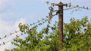 Swallows on the wires Stock Footage