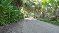 Trail shaded tropical vegetation French Polynesia Stock Footage