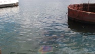 Oil Slick on Surface of Water from USS Arizona Oil Tanks Stock Footage