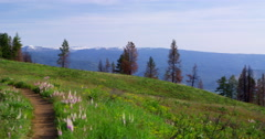 Wildflowers lining road with Wallowa Mountains in background Stock Footage