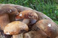 Porcini Mushrooms Closeup Stock Photos