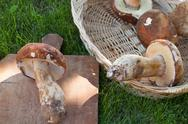 Porcini Mushrooms Stock Photos