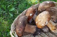 Basket With Porcini Stock Photos
