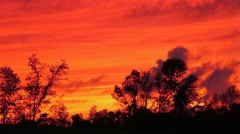 Sunset Silhouettes of Trees with Time Lapse Motion Stock Footage