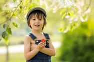 Cute beautiful child, boy, eating strawberries and in the park Stock Photos